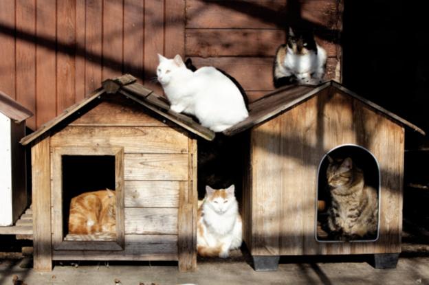 антитела к коронавирусу кошек 1 20
