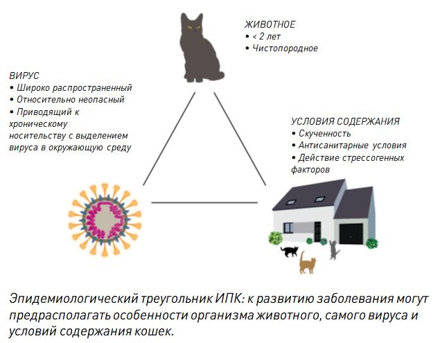 диагностика коронавируса кошек