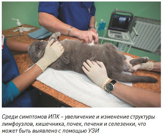 кишечные хронические вирусные инфекции кошек