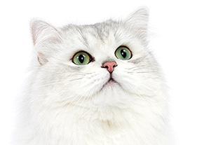 Как подобрать питание для кастрированного кота?