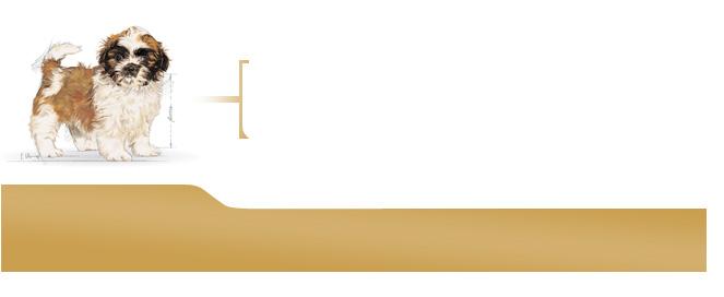 10 royal canin shih tzu junior. Black Bedroom Furniture Sets. Home Design Ideas