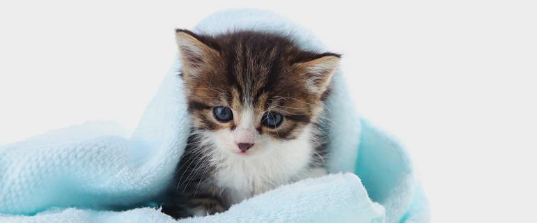 как поить молоком месячного котенка