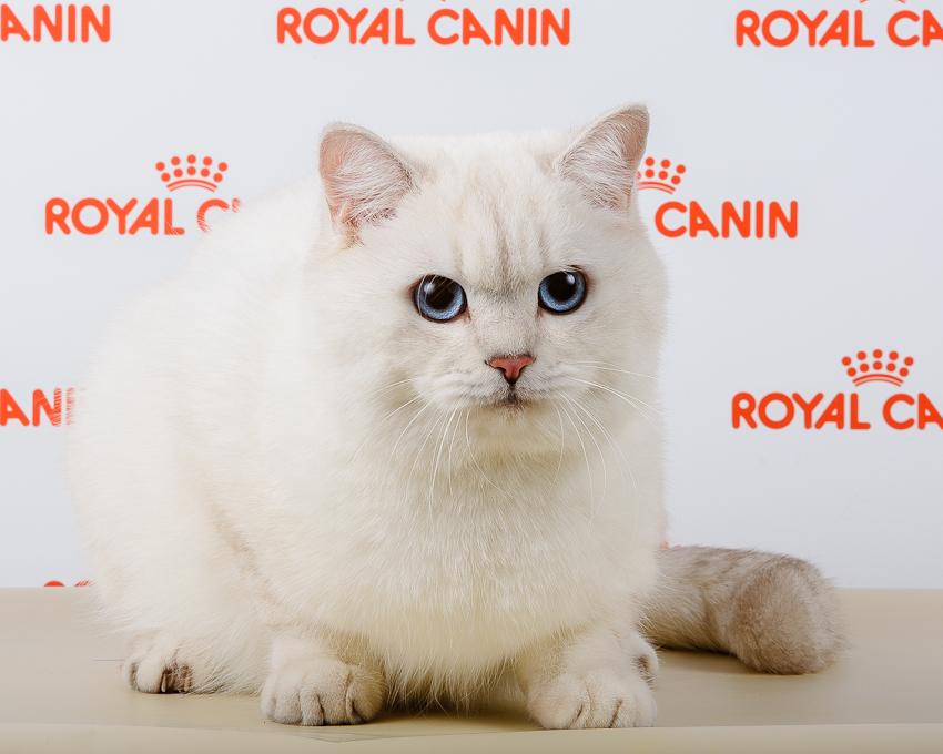 Корм royal canin grand prix 2016