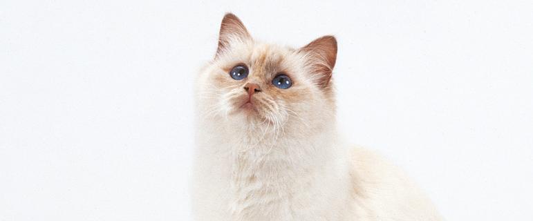 Как измерить температуру у кошки: какая в норме, как сбить высокую температуру коту