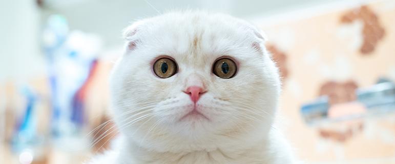 Белый кал у кошки причины что делать