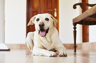 Как отучить щенка грызть мебель