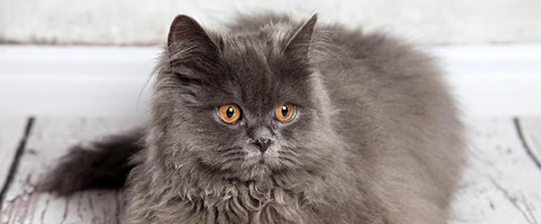 Заболевания почек  как продлить качество жизни кошке