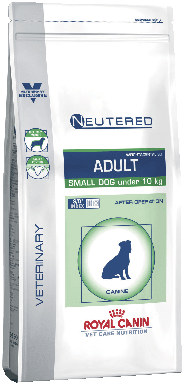 Neutered Adult Small Dog