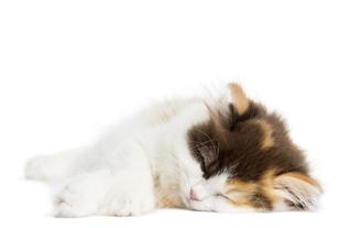 Особенности перевозки кошки в поезде и самолете как сделать путешествие комфортным