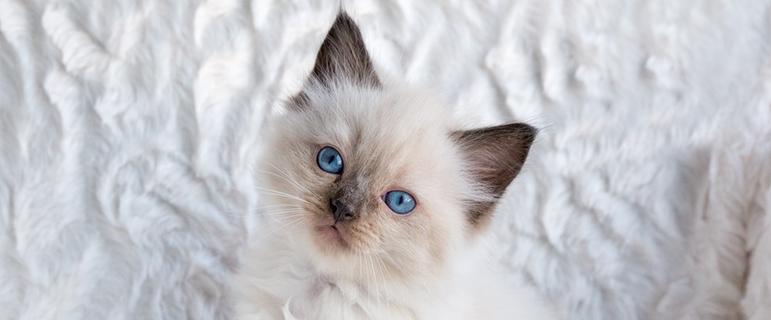 Что делать если котнок ничего не ест и мало пьт