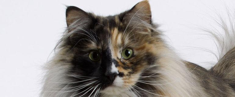 Почему у кошек слюни текут