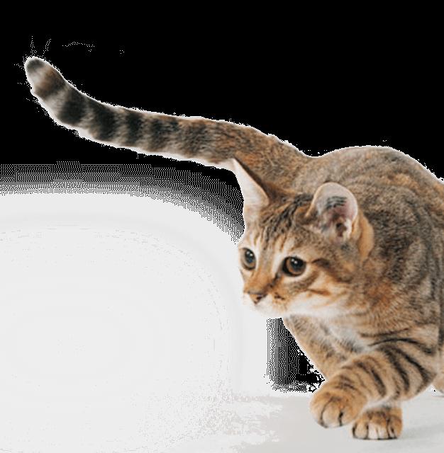 можно ли поить котенка молоком