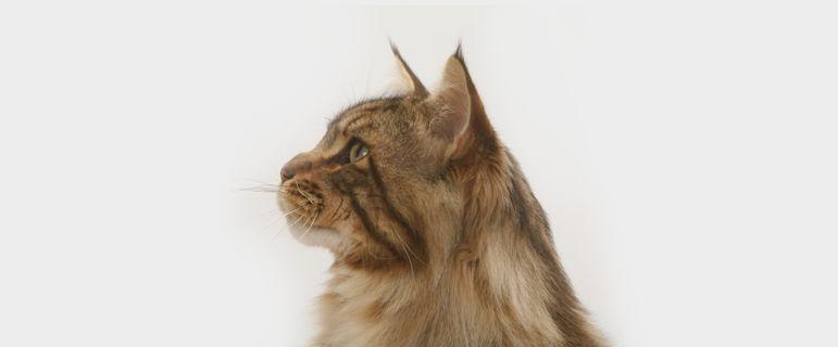 Средний возраст жизни кошек