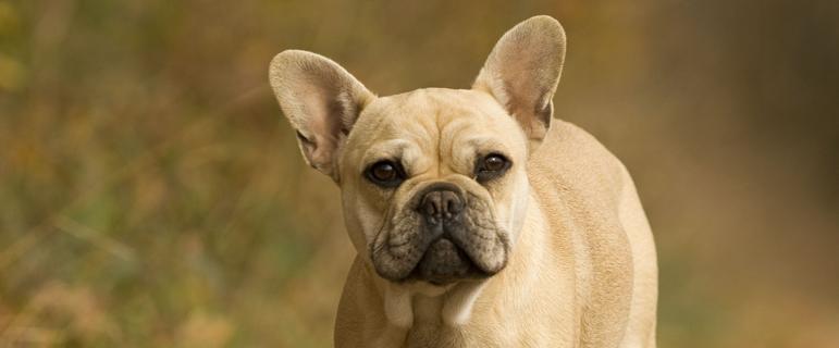 Лечение грибка кожи у собак