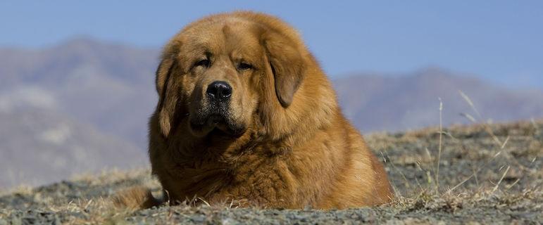 Что дать собаке при отравлении в домашних условиях