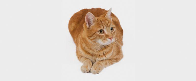 Почему кошка перестала ходить в лоток