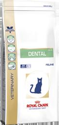 Dental DSO29