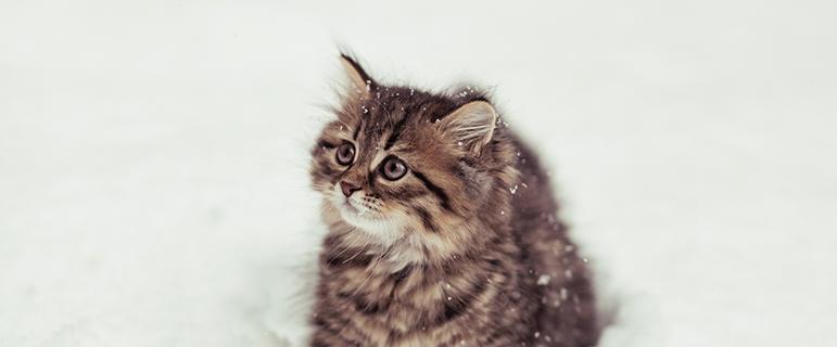 Как кошки и коты используют язык тела для общения