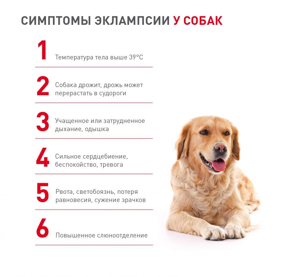 Диета При Метеоризме У Собак. Газы у собаки: самые распространенные причины и способы лечения