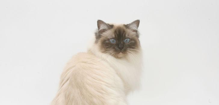 Болезнь суставов таза у кошек тутор для коленного сустава жесткой фиксации