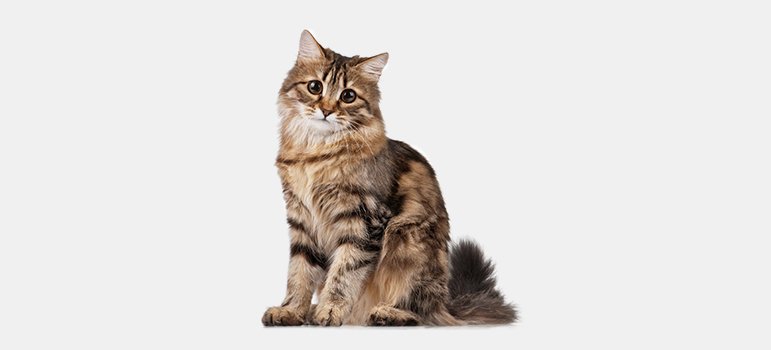 Royal-Canin-9-fluffy-cats.jpg