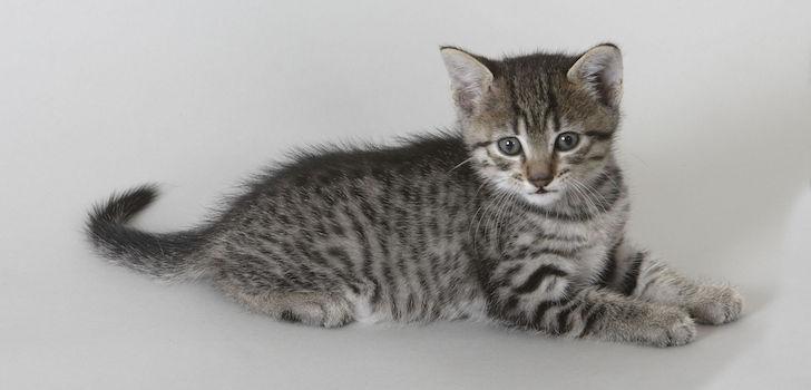 Котенок чихает, причина – инородный предмет ветром сдует?
