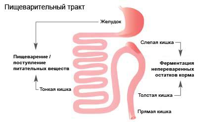 Пищеварение и роль питания