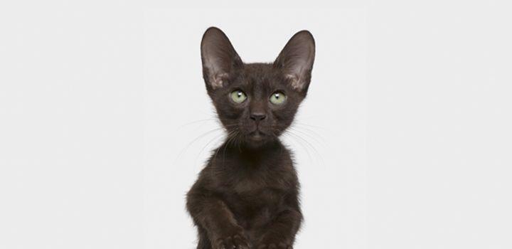Что говорит кошка?