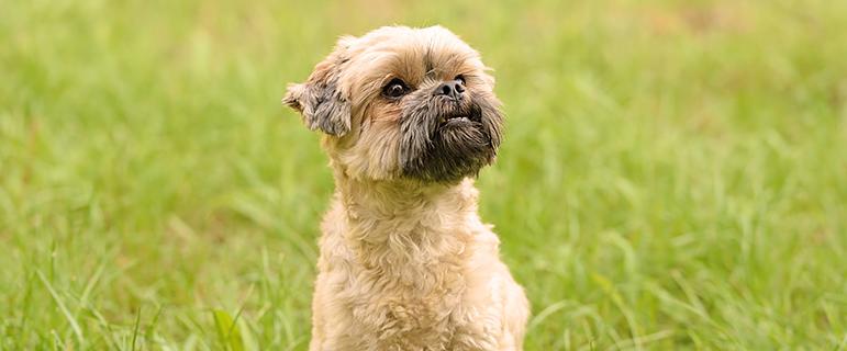 правильное питание собаки натуральными продуктами