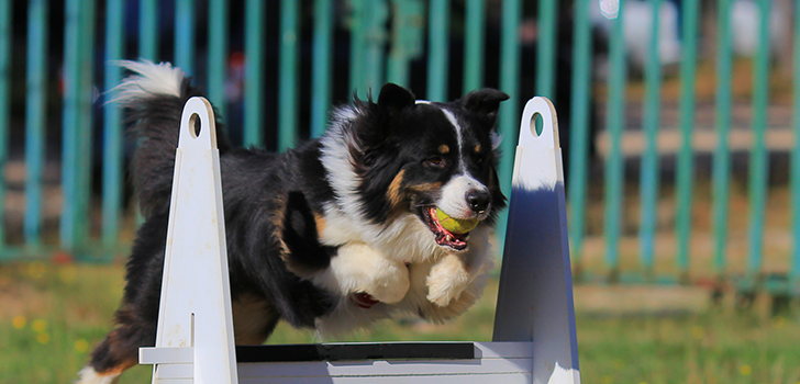 Flyball_728.png