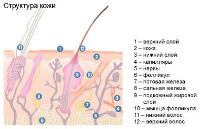 Кожа и шерсть - зеркало здоровья