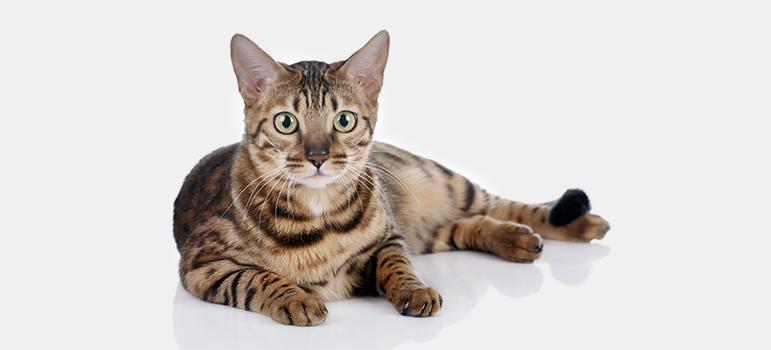Лечебные корма для кошек при колите thumbnail