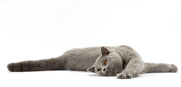 что делать если у кошки