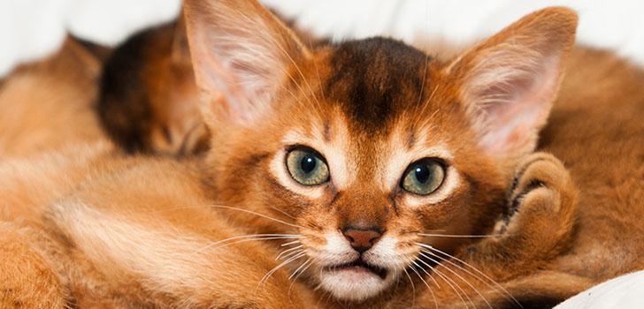 кот характер