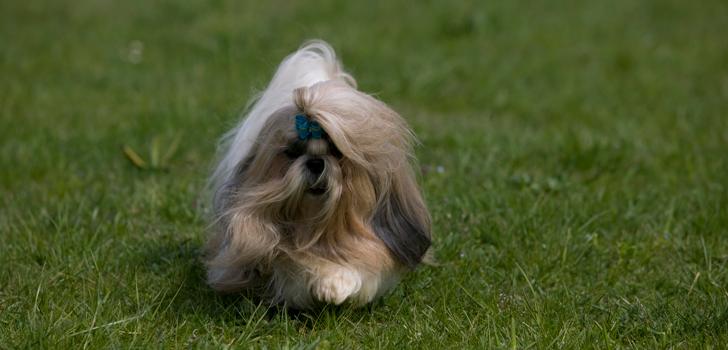 Когда линька у собак