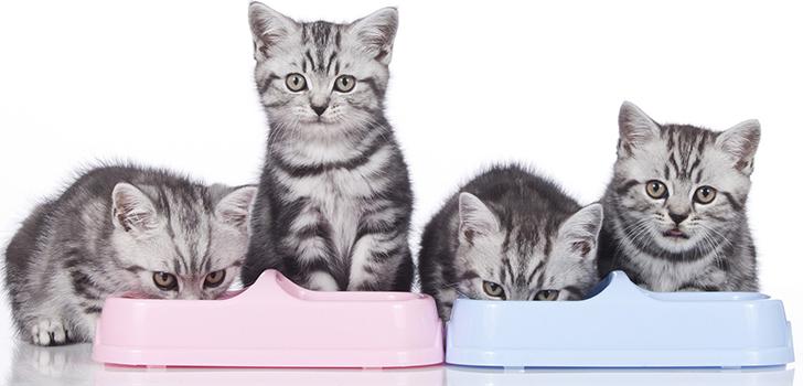 Картинки по запросу Как правильно выбрать корм для котенка?
