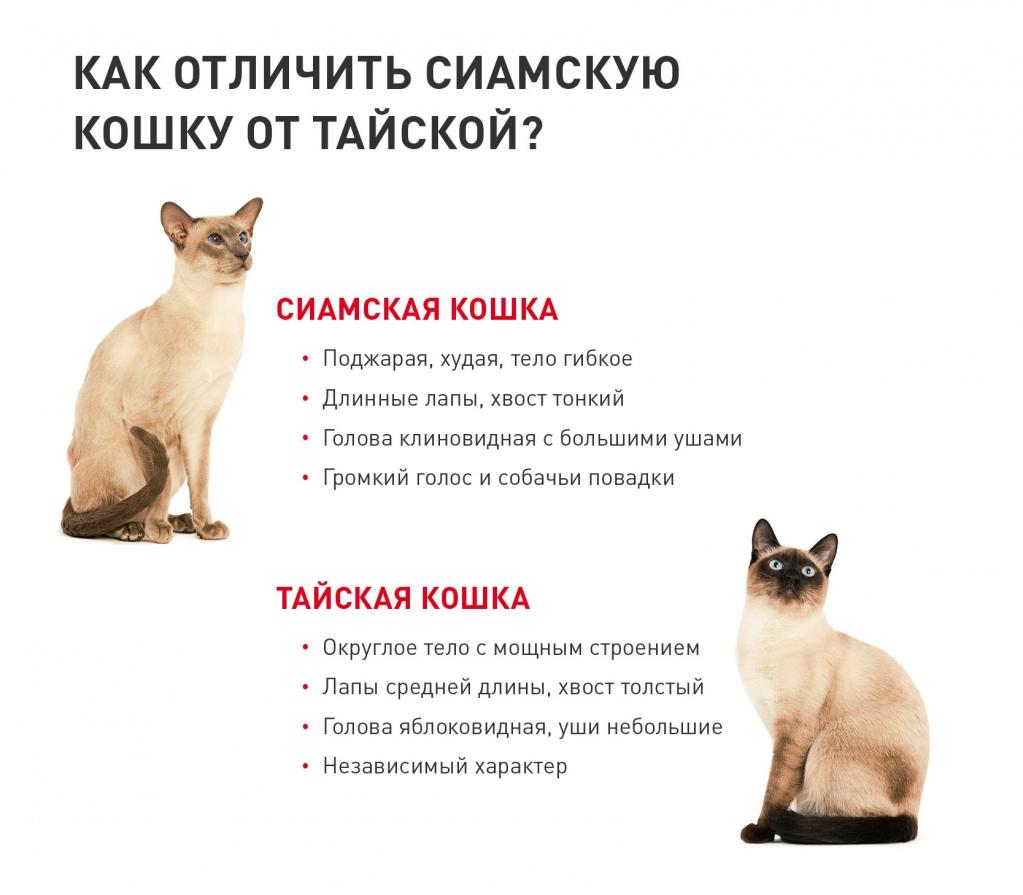 Royal-Canin-2-mini-info-cats.jpg