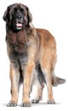 Новые корма для собак крупных размеров