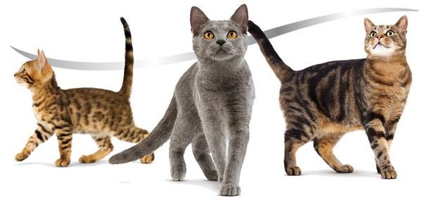 Royal Canin Sterilised - гамма кормов для стерилизованных кошек на протяжении всей жизни