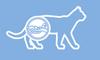 Здоровье мочевыделительной системы кошки