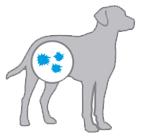 Профилактика заболеваний далматина