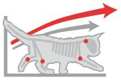 Длительный рост котенка Мейн куна