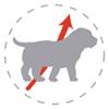 Рост щенка лабрадора