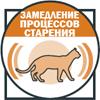 Замедление процесса старения кошки