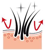 Здоровая кожа и красивая шерсть ши-тцу
