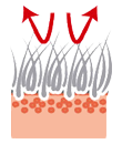 Защита кожи и шерсти щенка голден ретривера