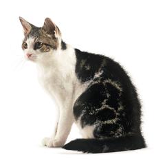 все породы котов с фото