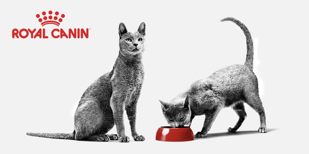 Royal canin recovery при хпн
